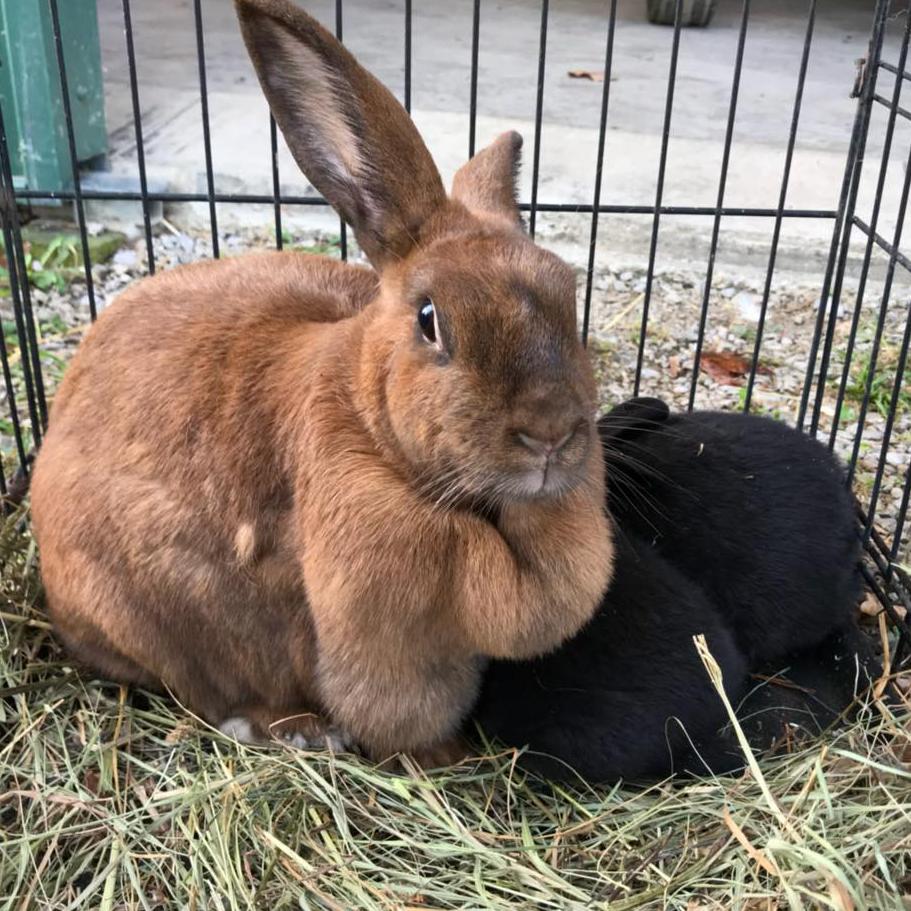 rabbit2circle.png