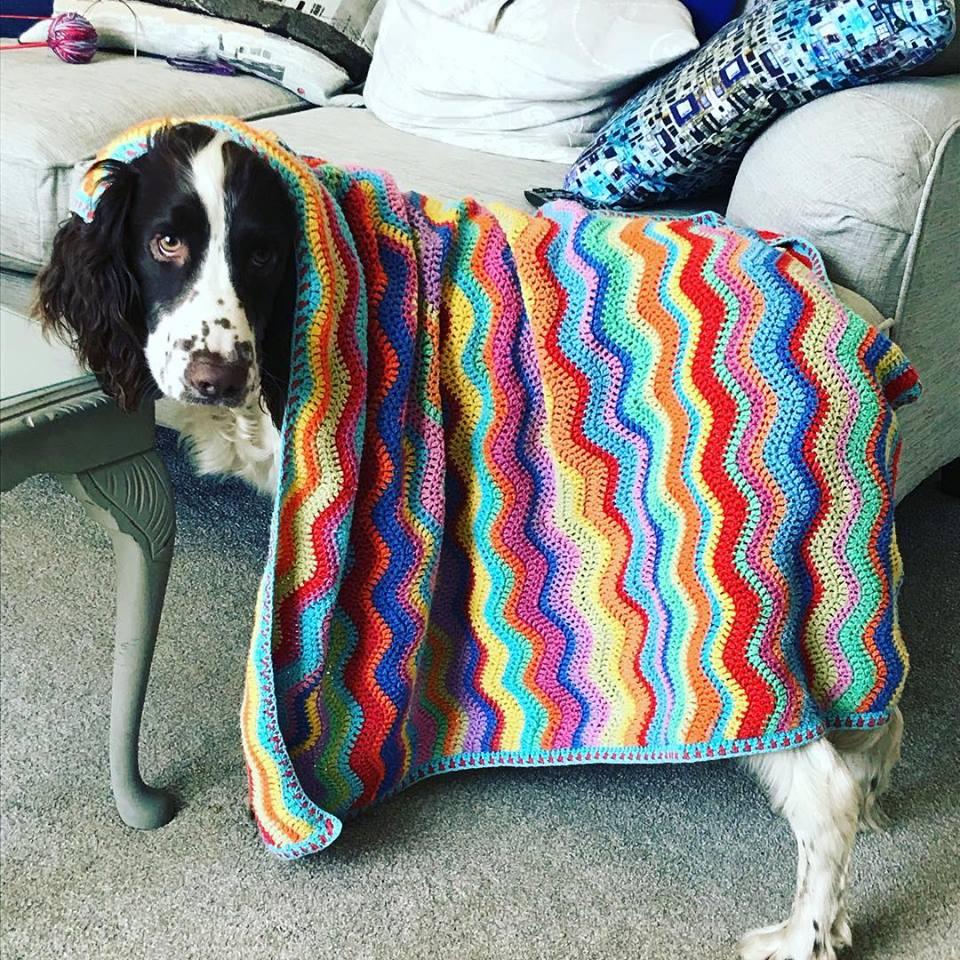Stanley&blanket.jpg