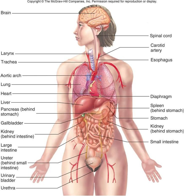 b9503d401e8a6ad5cad2d504bd1e683c_anatomy-and-physiology-of-human-body-organs-clipart-human-anatomy-_736-781.jpg