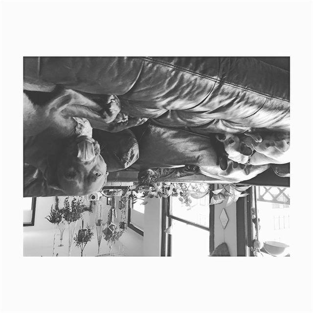 #blackandwhite #upsidedown #losangeles Kids 🖤