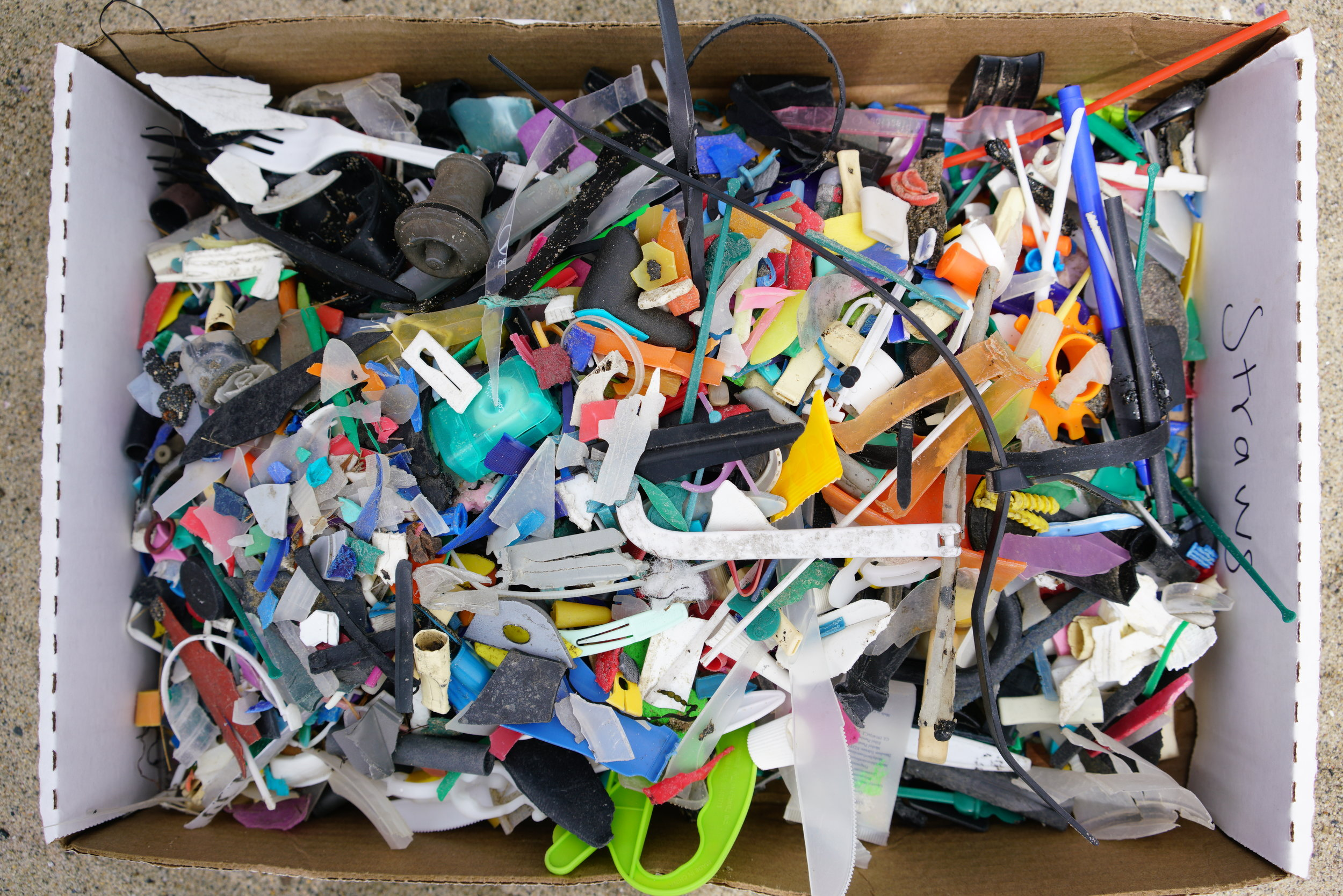 Daana Blue Micro Plastics Collected in 1 hour.JPG