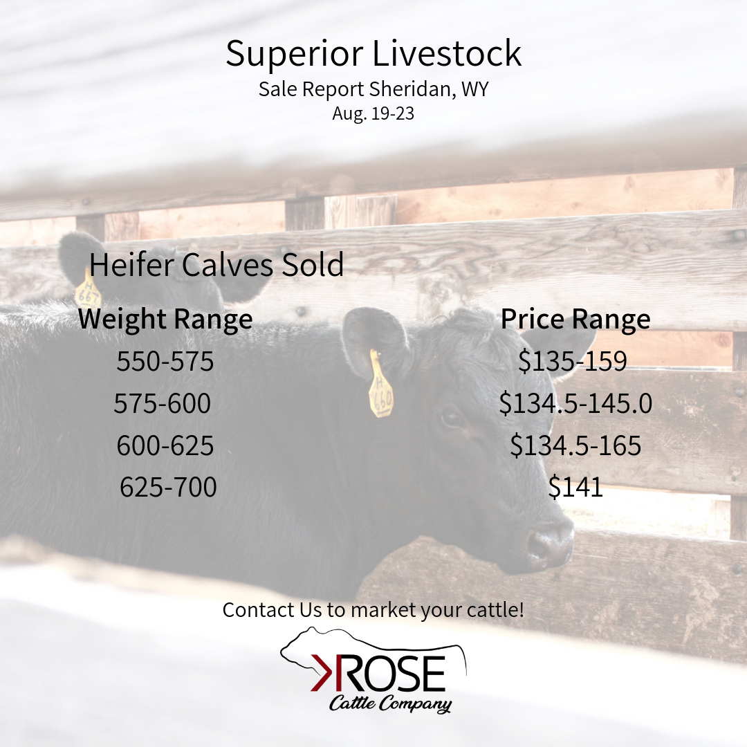 Heifer Calves Sold