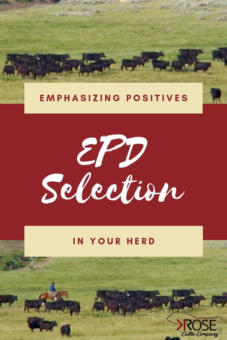 EPD Selection