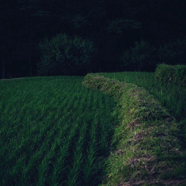 穂含み月。市野々から。 #和久屋傳右ヱ門 #和久傳 #天満神社 #久美浜