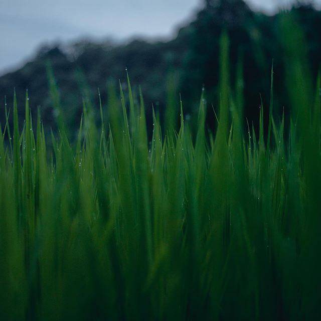 葉月の市野々から。 #和久屋傳右ヱ門 #和久傳 #天満神社 #久美浜
