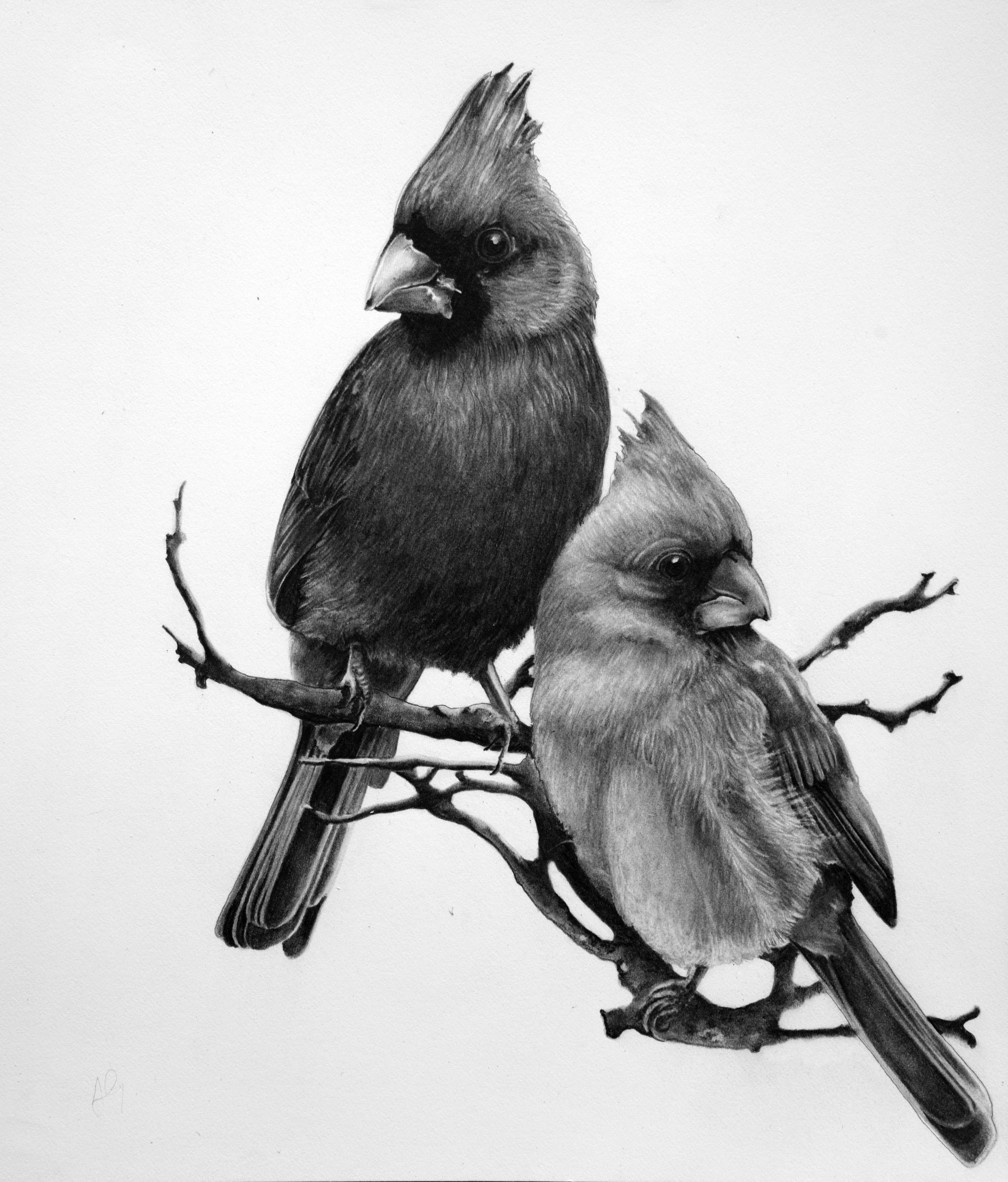 alicia-graden-cardinals-graphite-on-paper-pg-1.jpg