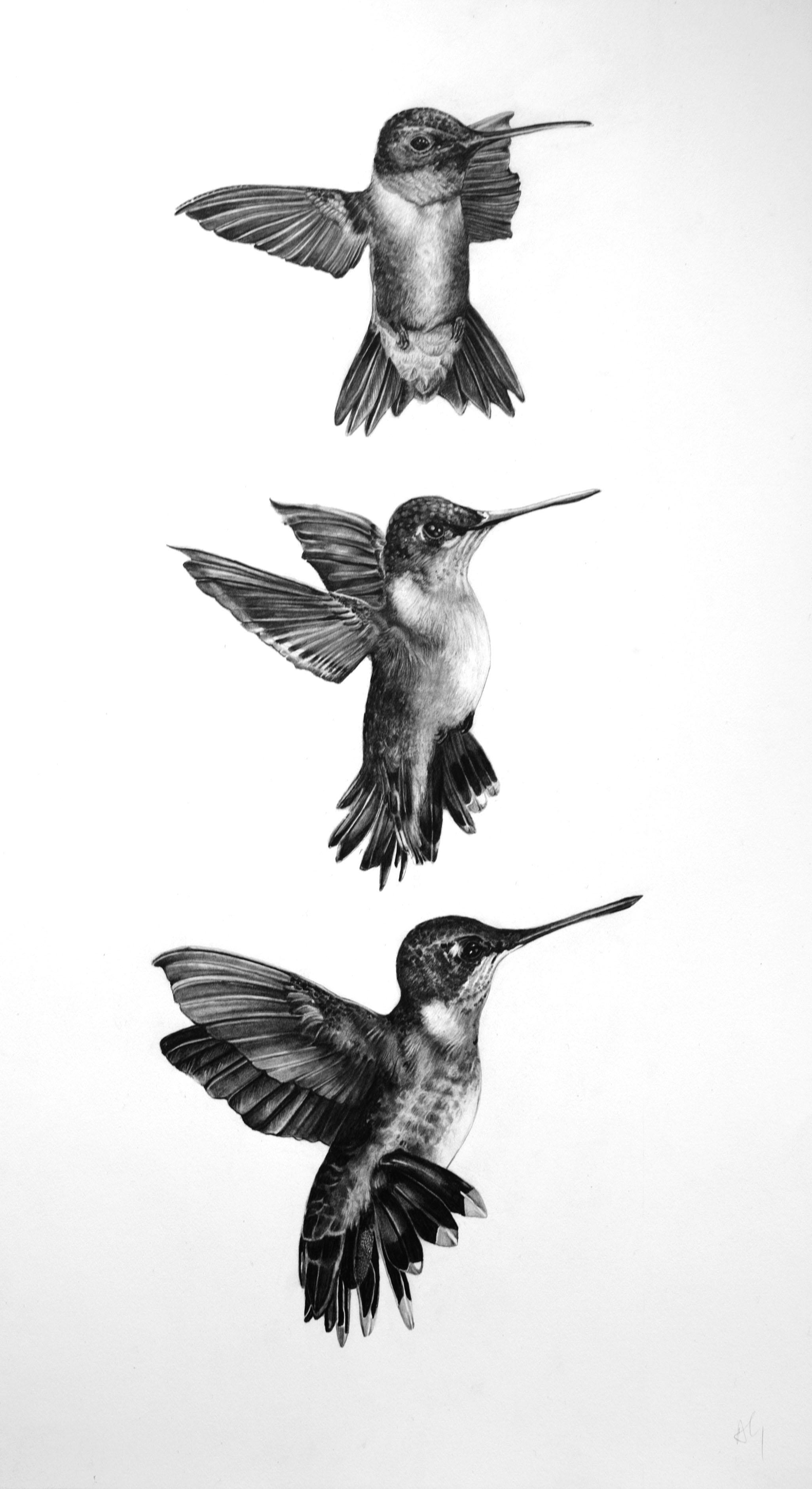 alicia-gradonhummingbird-trio-1.png