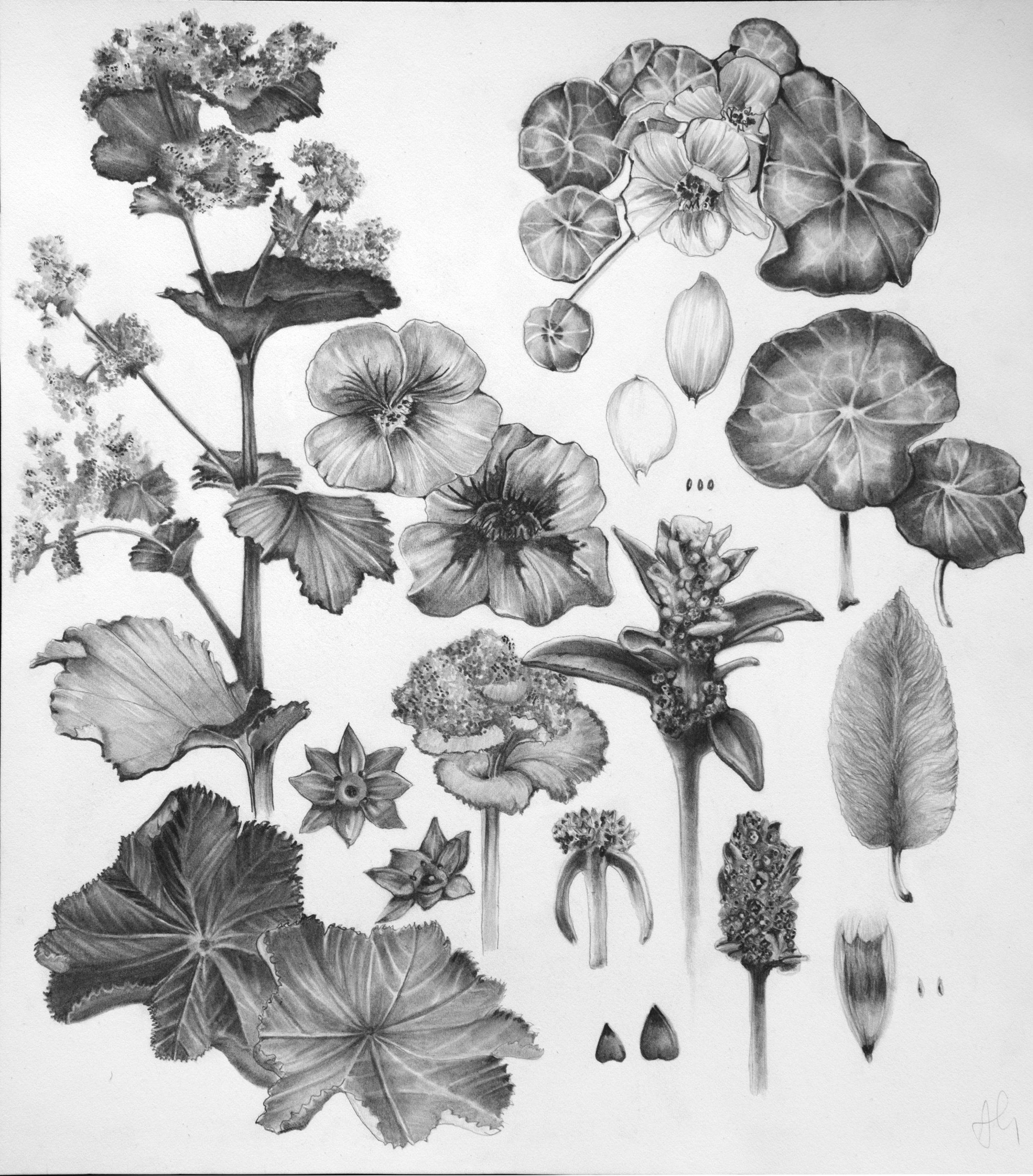 botanical-plate-1.jpg