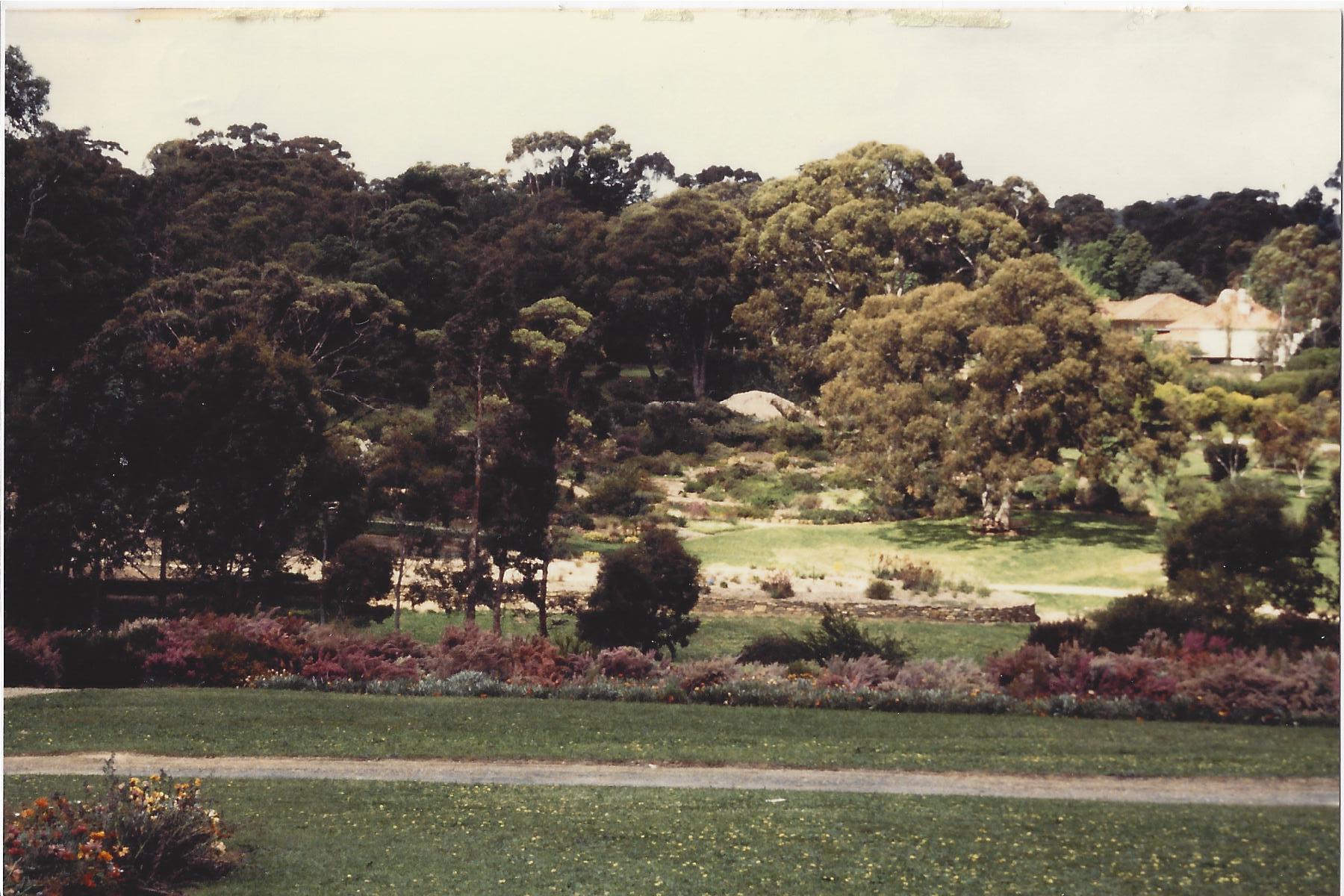 Image-4-S.W.-Australia-Adelaide-Botanic-Garden.-Tree-Heaths-1.jpg