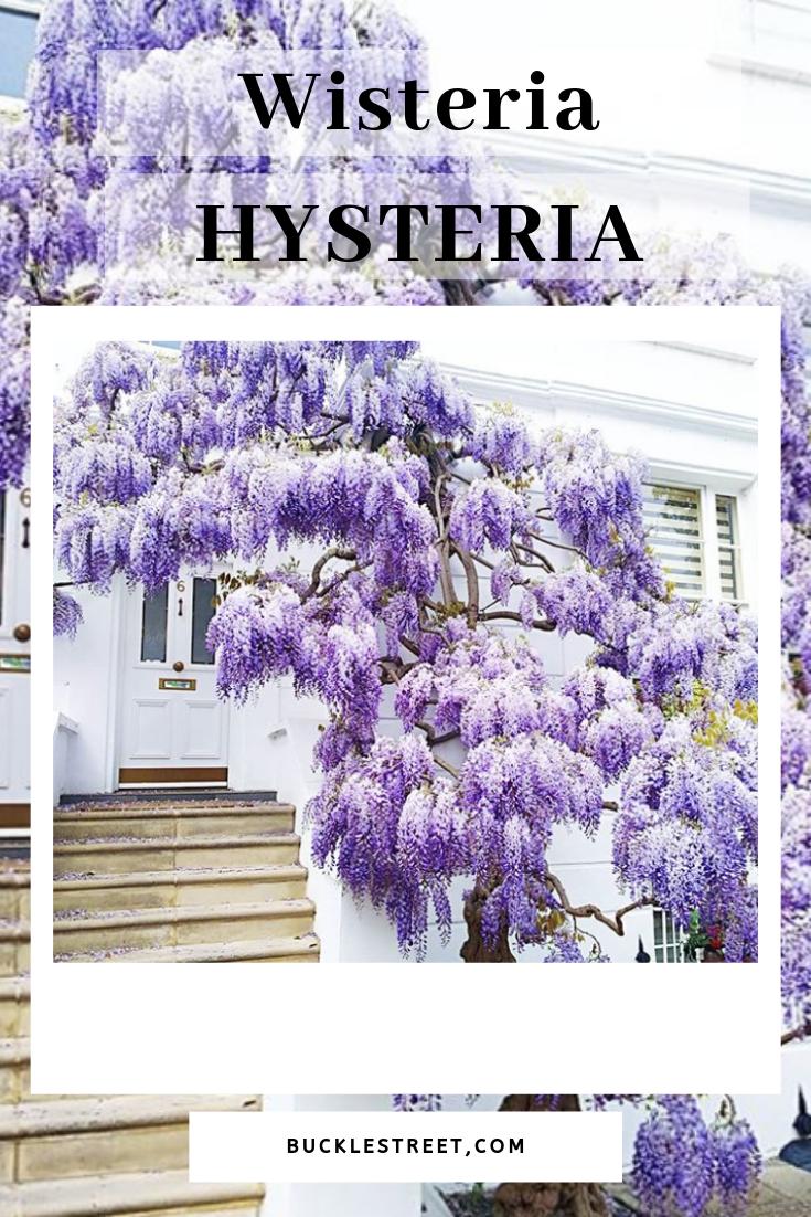 wisteria hysteria.png