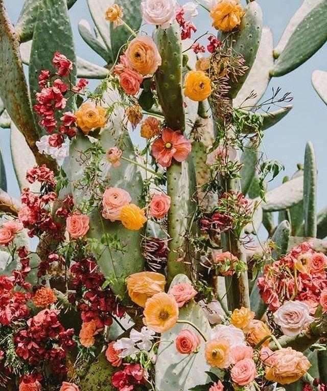 flowering cactus photo by @britainbanks + + + + + #floweringsucculent #cactusflower