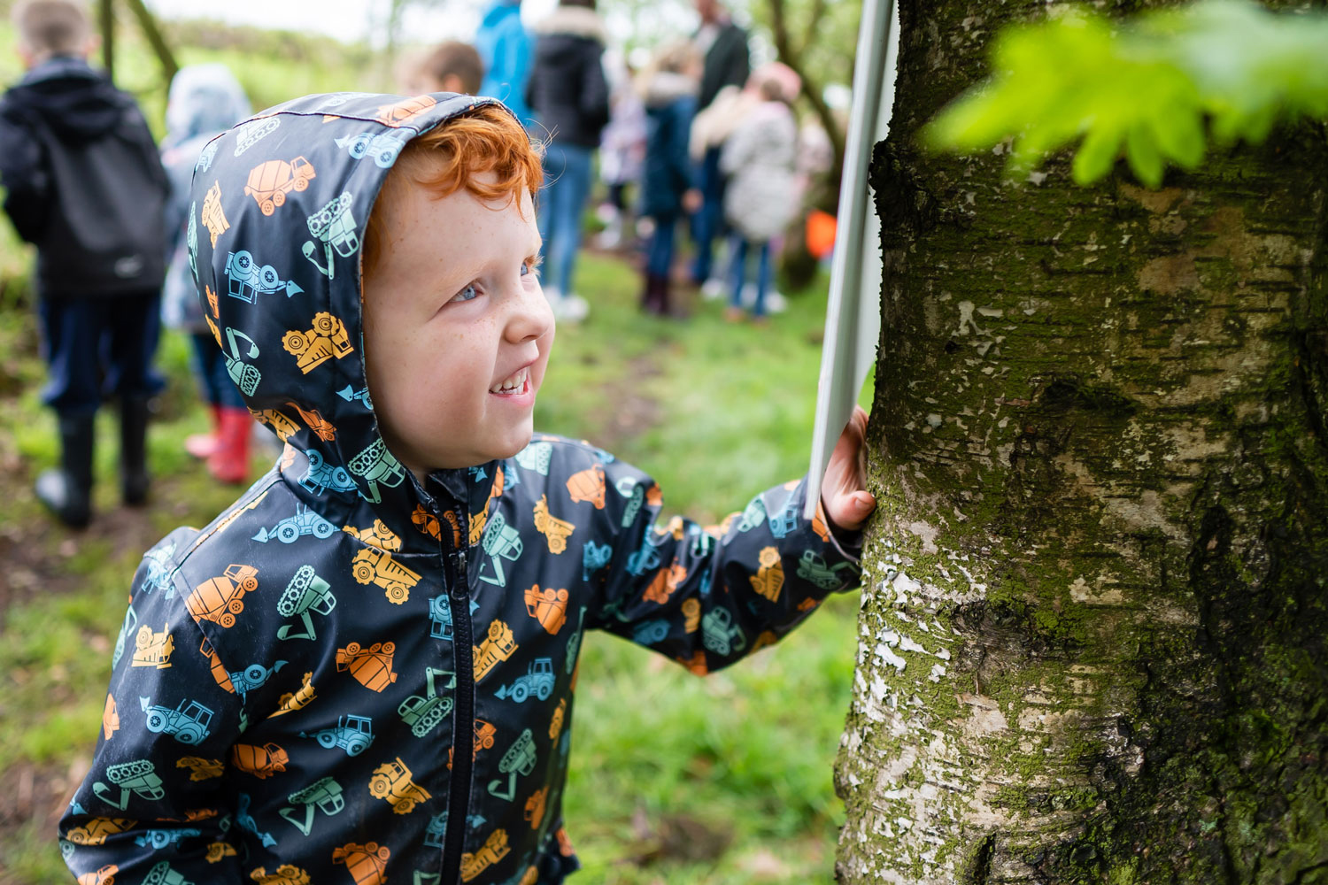 A small boy reads the information board attached to a Silver Birch Tree.
