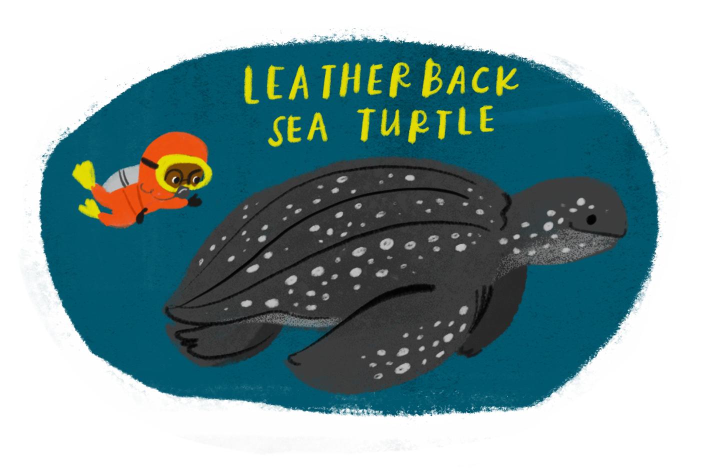 RESOURCES_leatherback.jpg