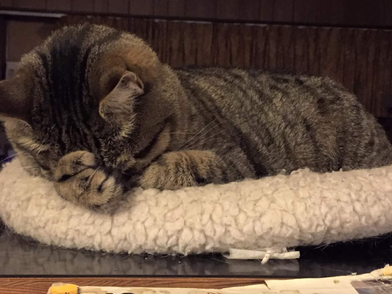 cat-surrender.jpg