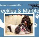 Freckles-Marbles-Plate-150x150 - Kennel Sponsorship.jpg