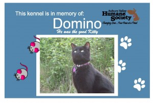 Domino-Plate-2-300x202 - Kennel Sponsorship.jpg