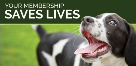 membership-image-550x268 - Annual Membership.jpg