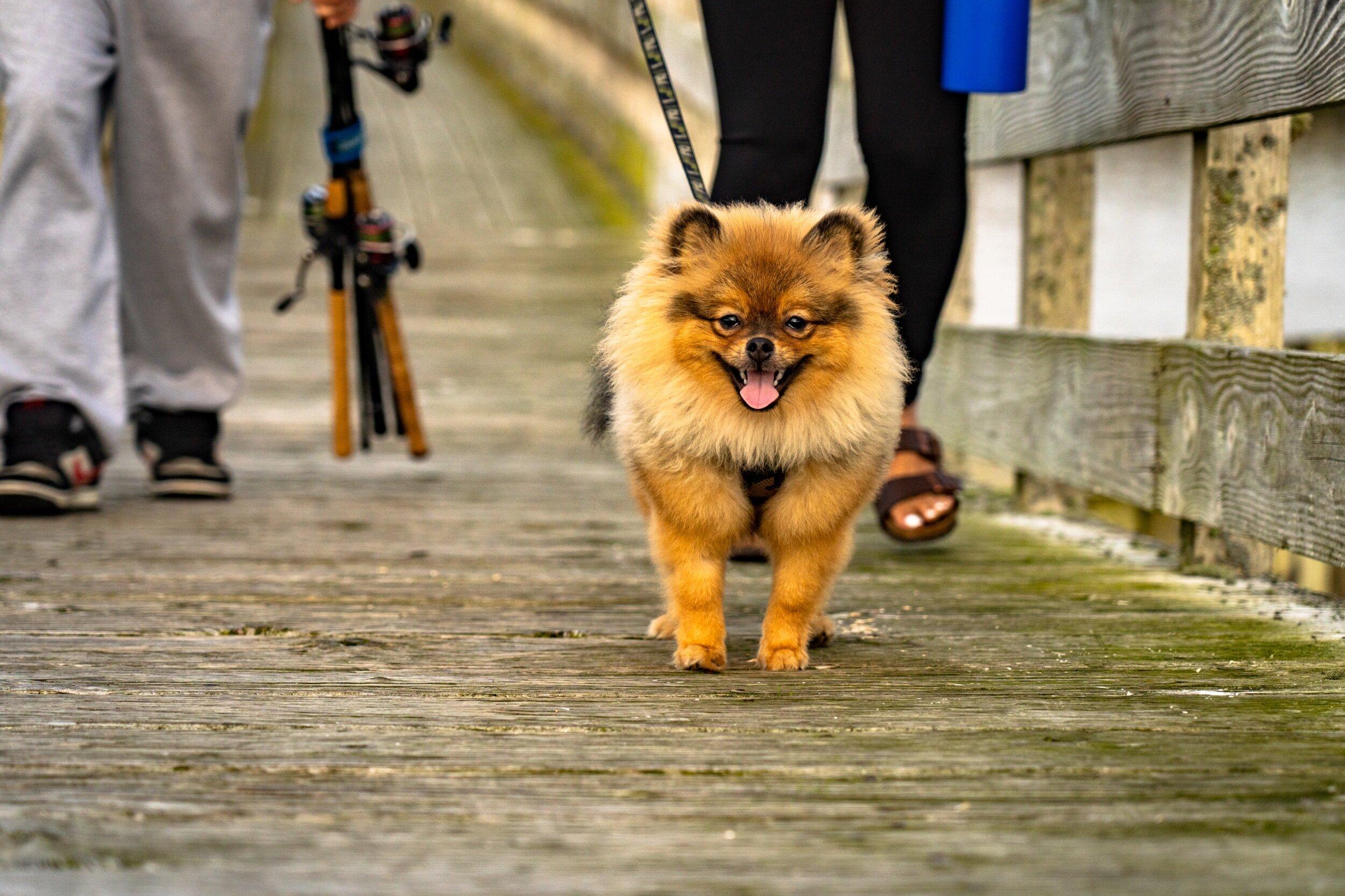Dog Friendly - Westport unleashed! Bring the entire family, Westport is an extremely dog friendly town.Find the perfect beach in Westport!