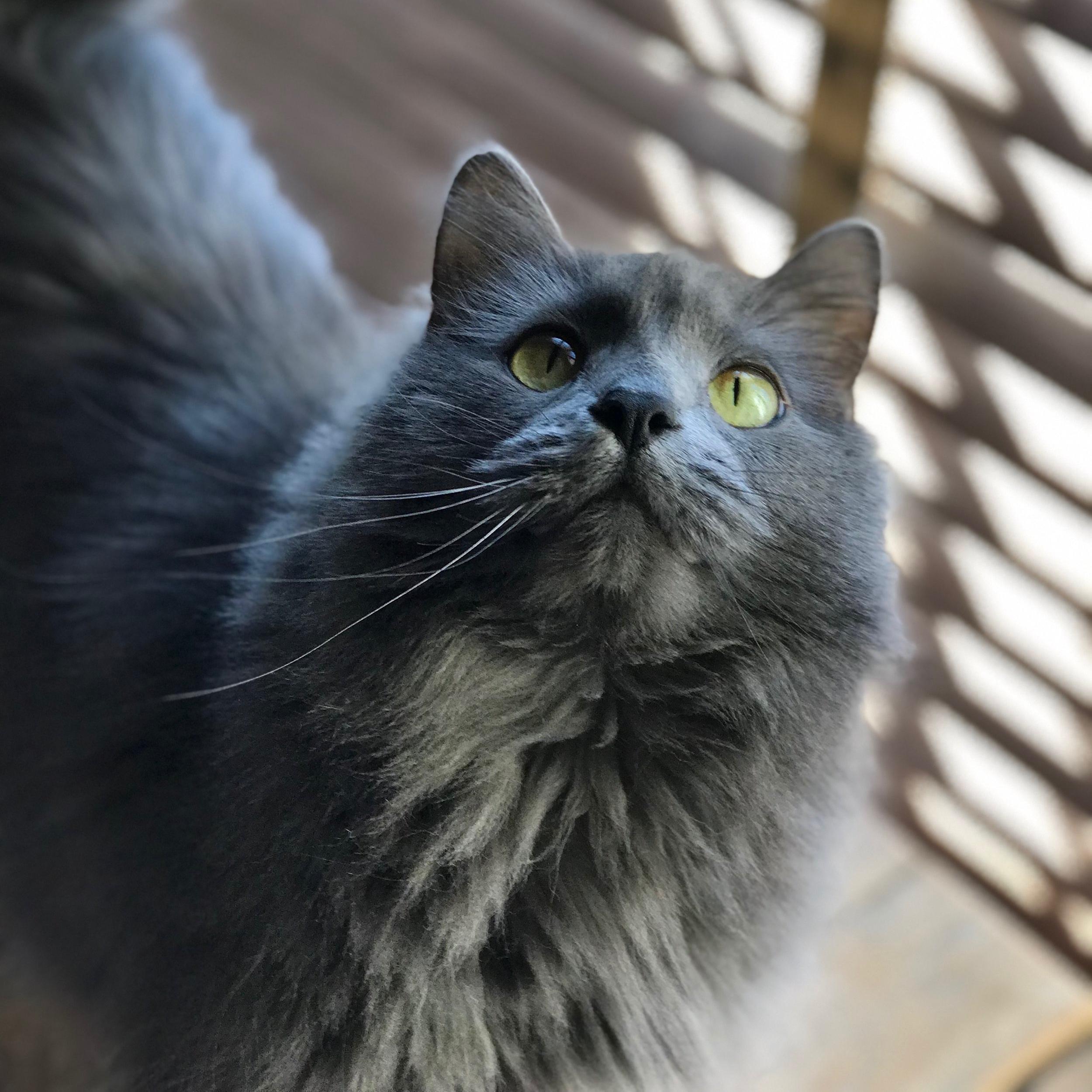 Dr. Laura Bransky, DVM, FAQ's Cat