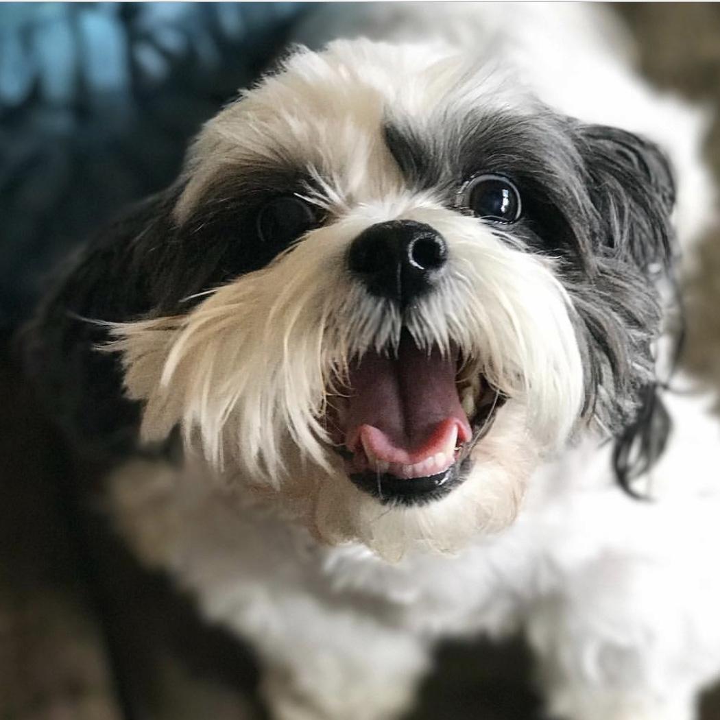 Dr. Laura Bransky, DVM, Happy Pup