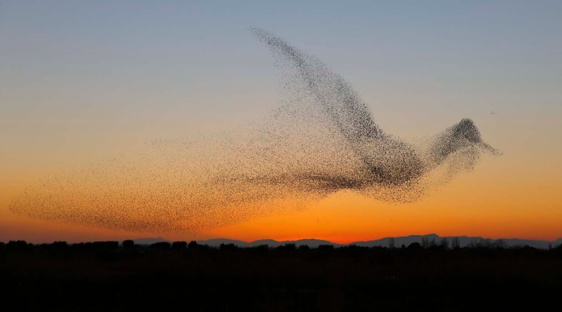 © Daniel Biber, Germany, Shortlist, Professional, Natural World & Wildlife, 2018 Sony World Photography Awards,  full article here  on his photography of starlings.