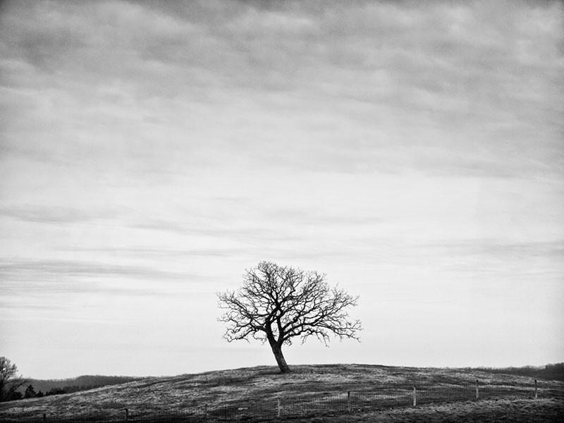 Photo Credit:  Solitude, Keith Dotson Photography