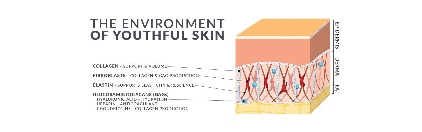 Environment of Youthful Skin Transparent.png