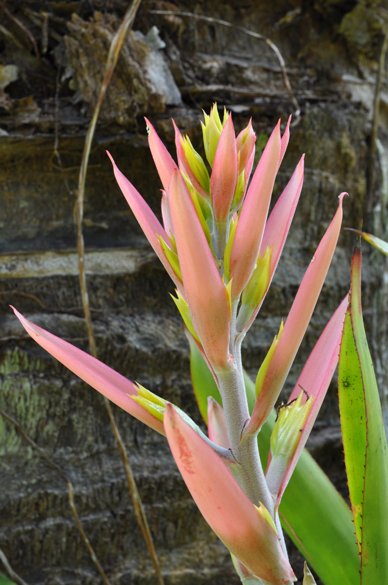 fleur9.jpg
