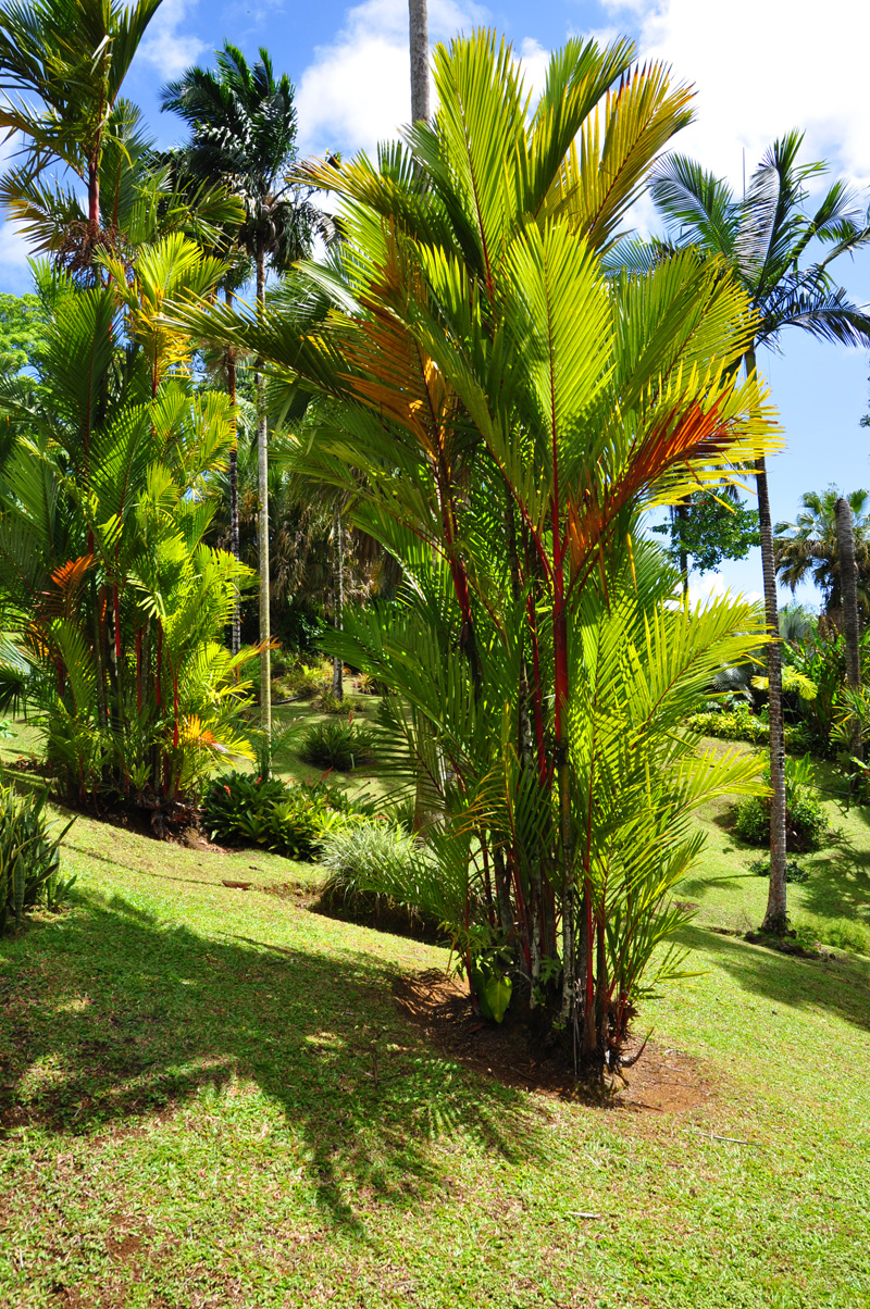palmier1.jpg