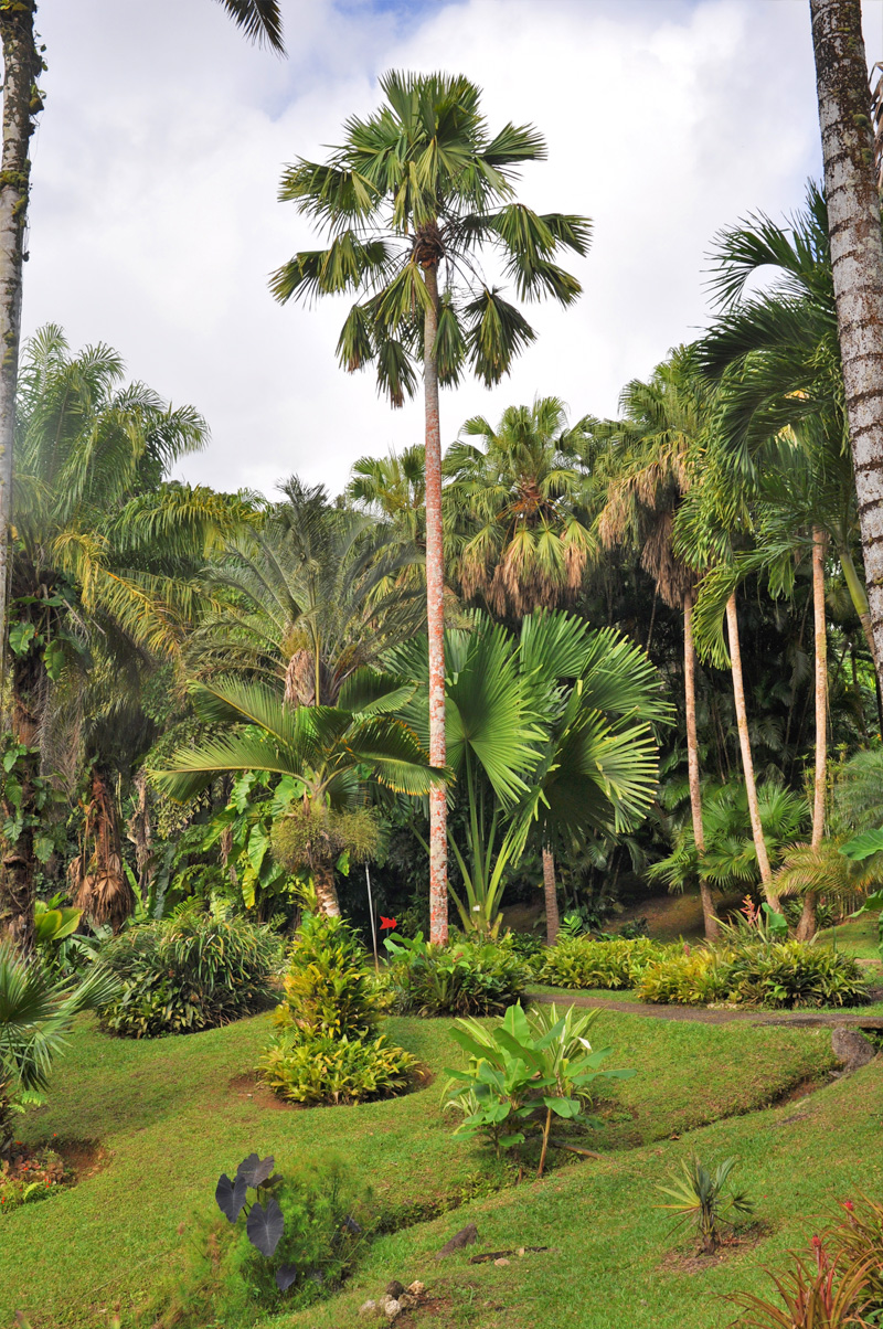 palmier3.jpg