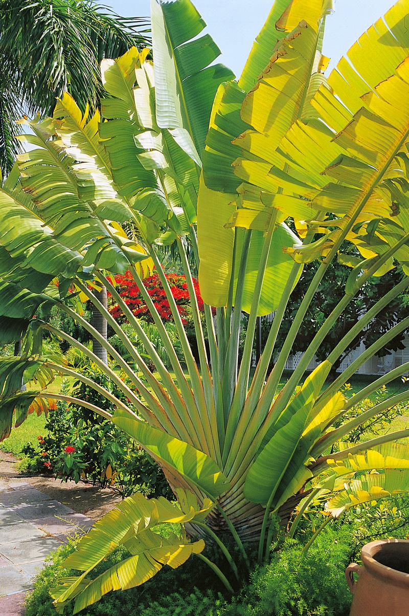 palmier5.jpg