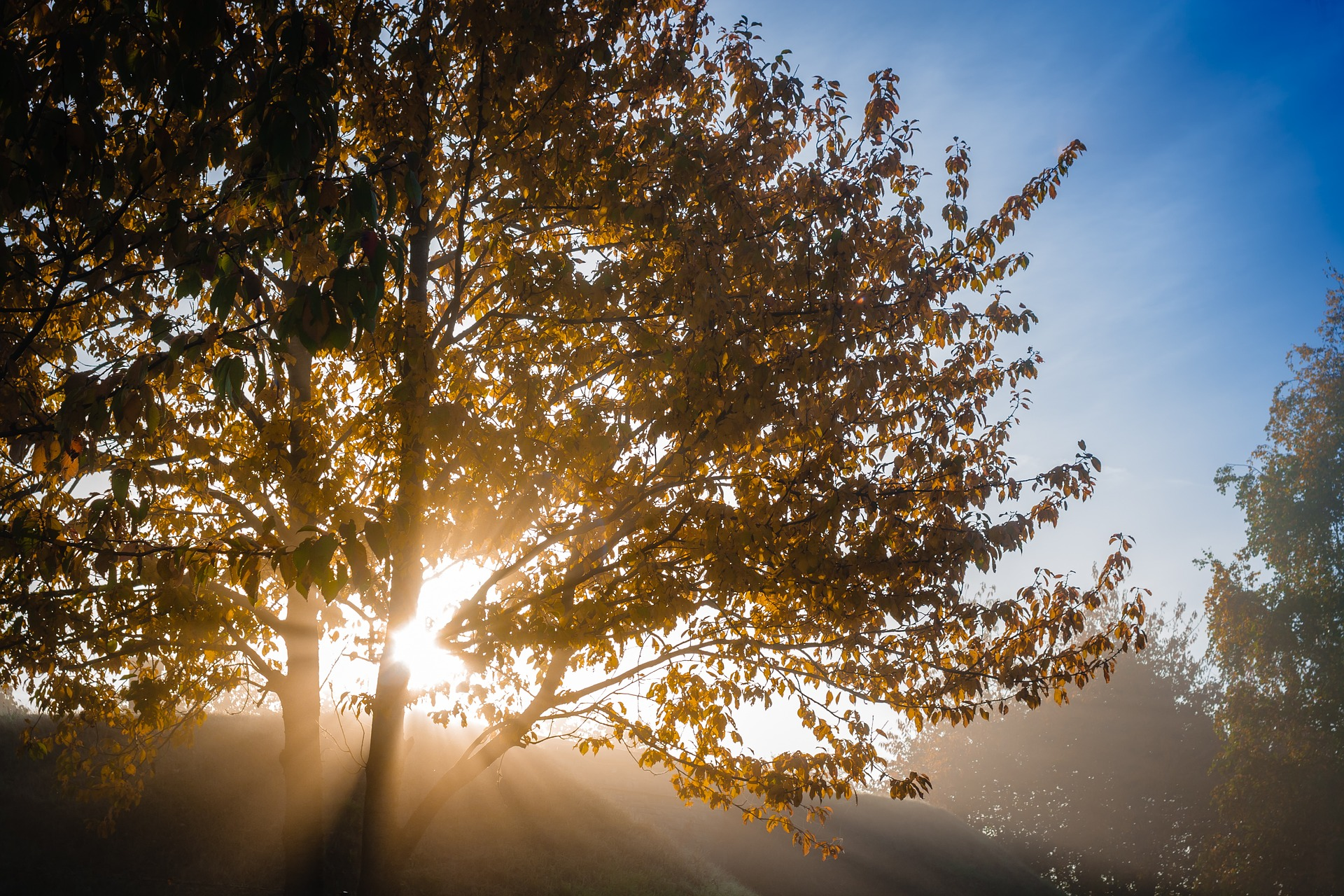 God's Goodness: In Human Destiny -