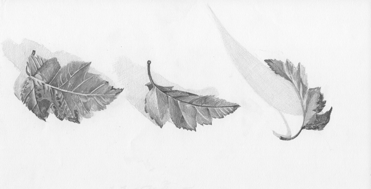 Graphite on Strathmore paper - 2008
