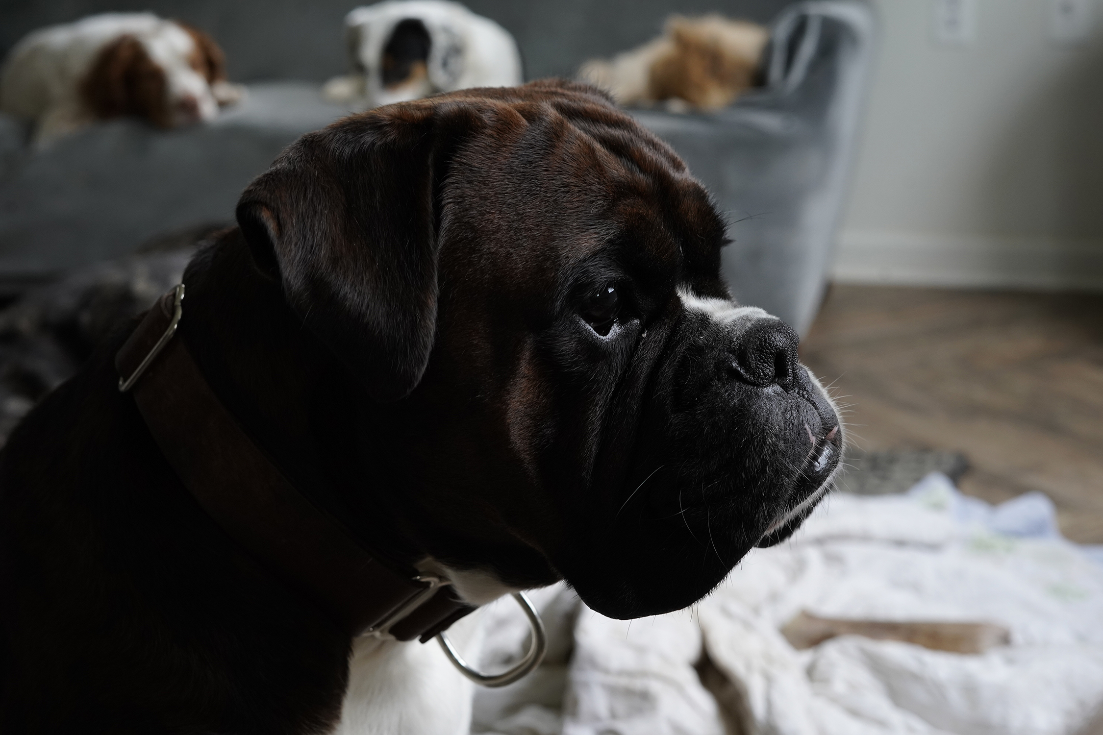 How to photograph your pet - You don't need to have a professional picture taken…