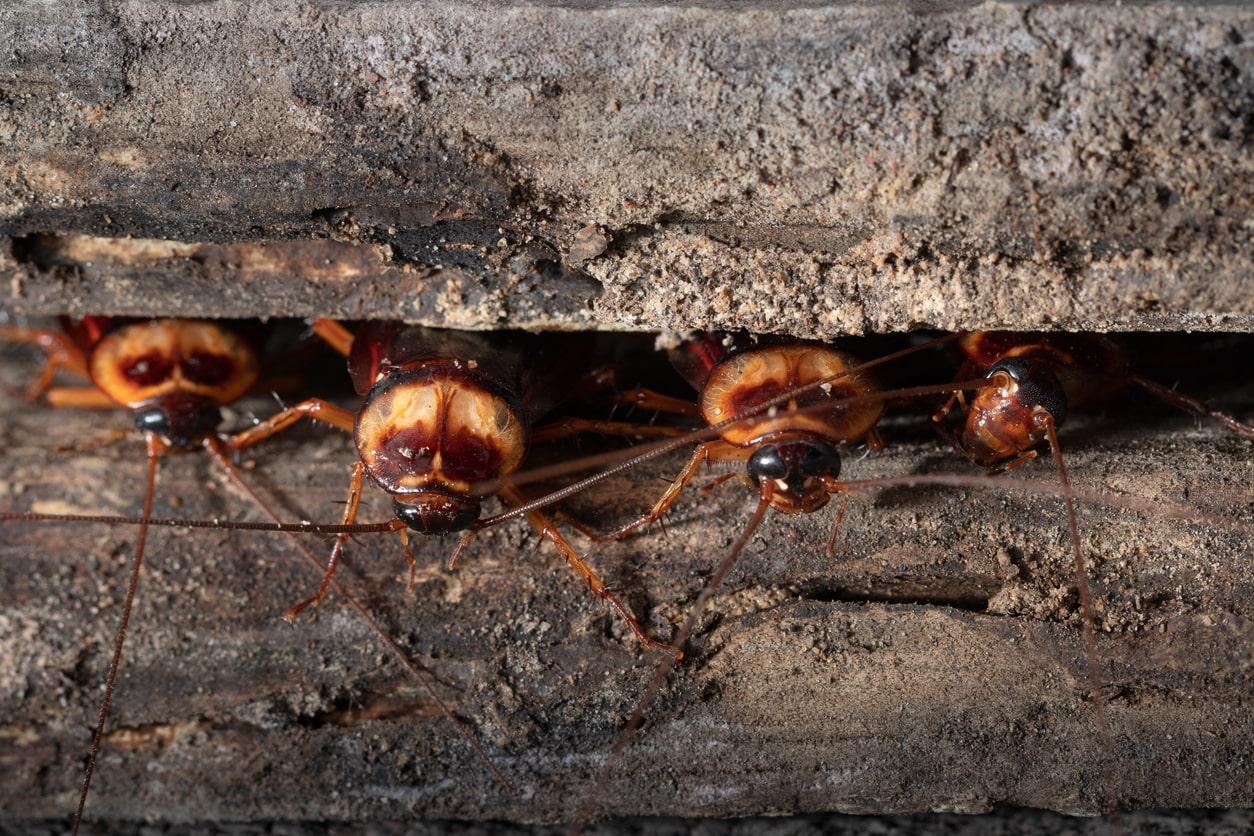 Identify Your Pest | Identify Bugs Online — Pest Control