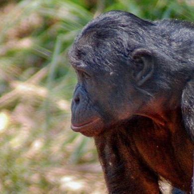 Un court-métrage rend hommage aux concessions forestières communautaires en RDC - Nouvelles de l'environnement https://buff.ly/2HZj92I