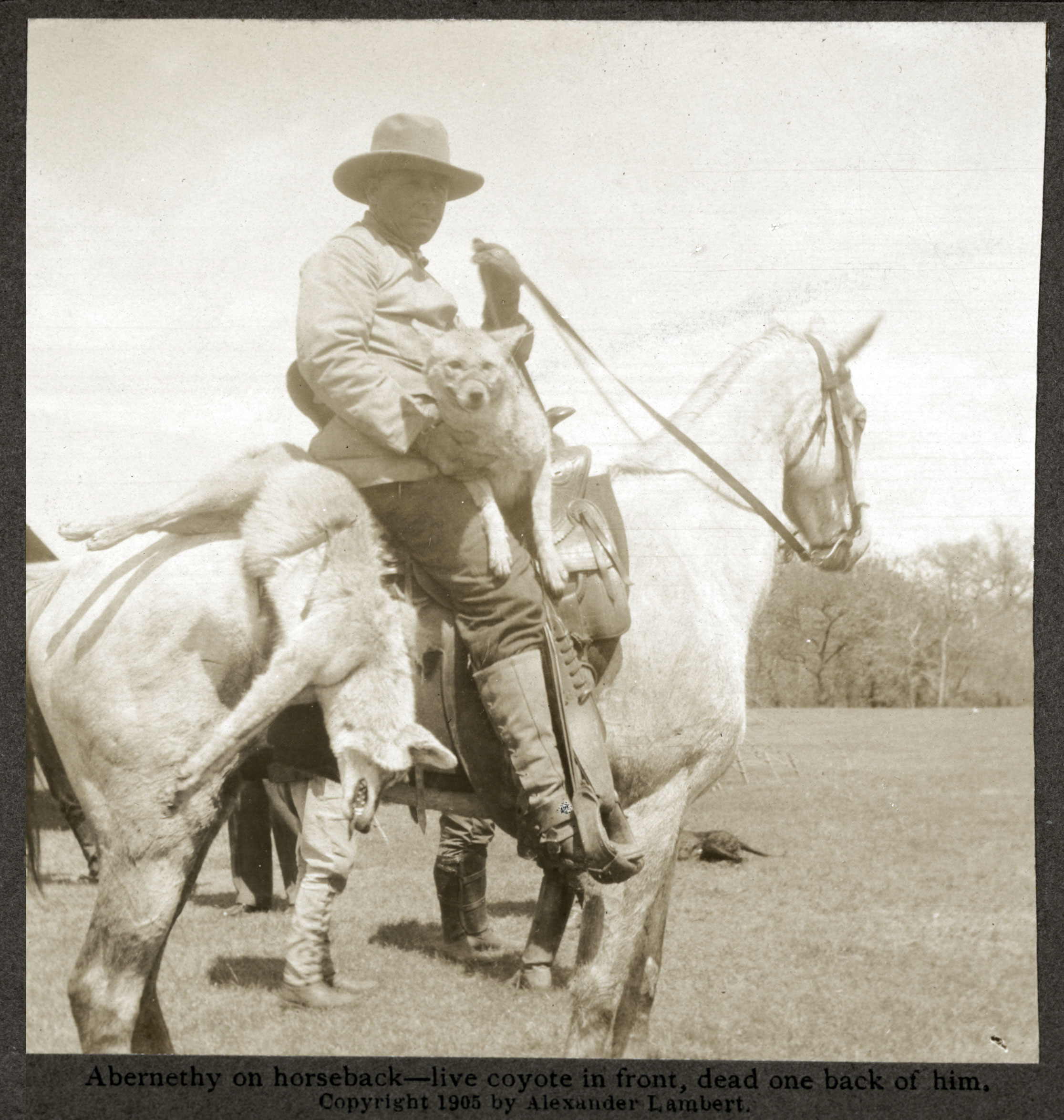 John R. Abernethy with a dead coyote and a tied-up living coyote. 1905,  Library of Congress and Dickinson State University.
