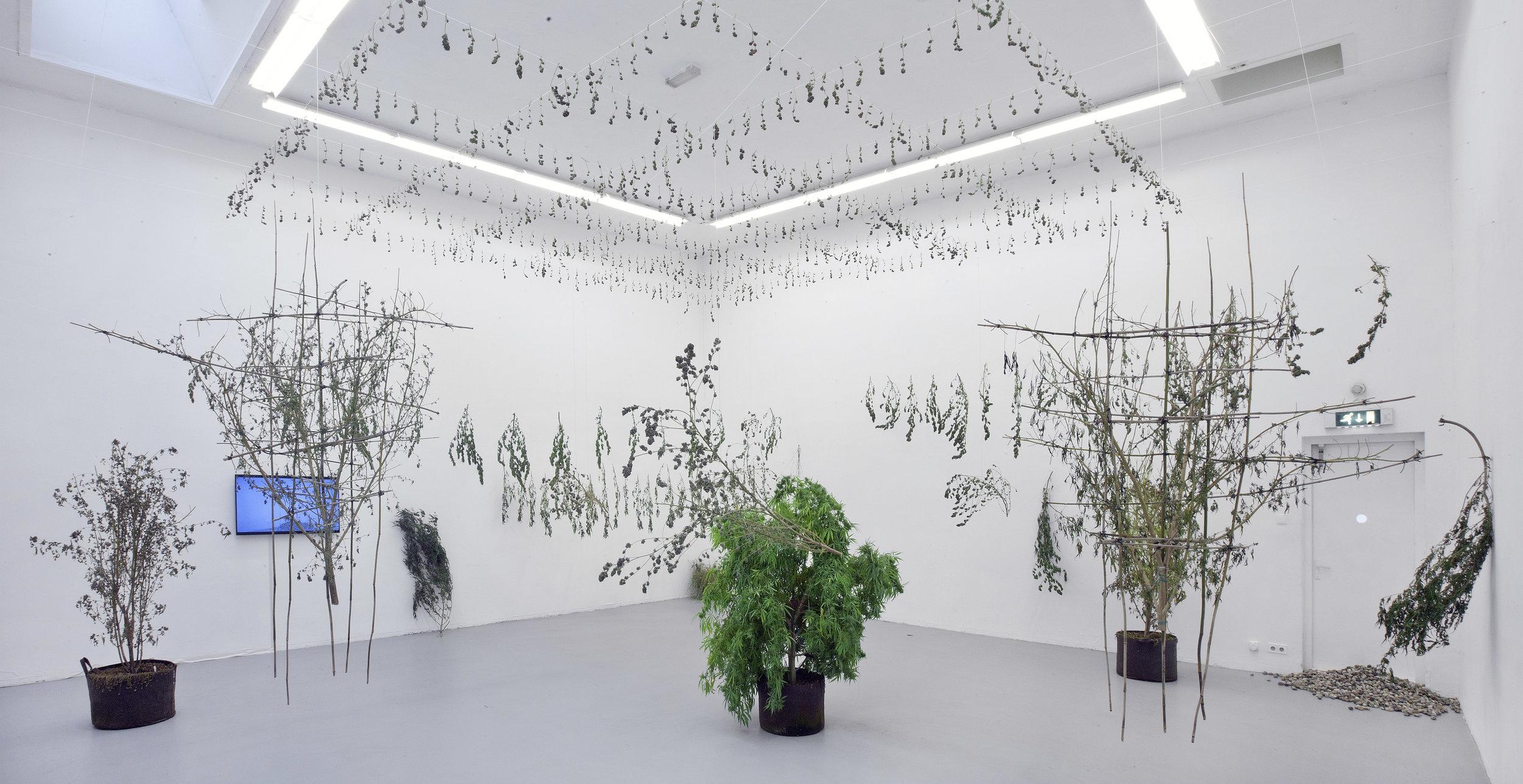 Lungs of Flowers   Rijksakademie, 2018