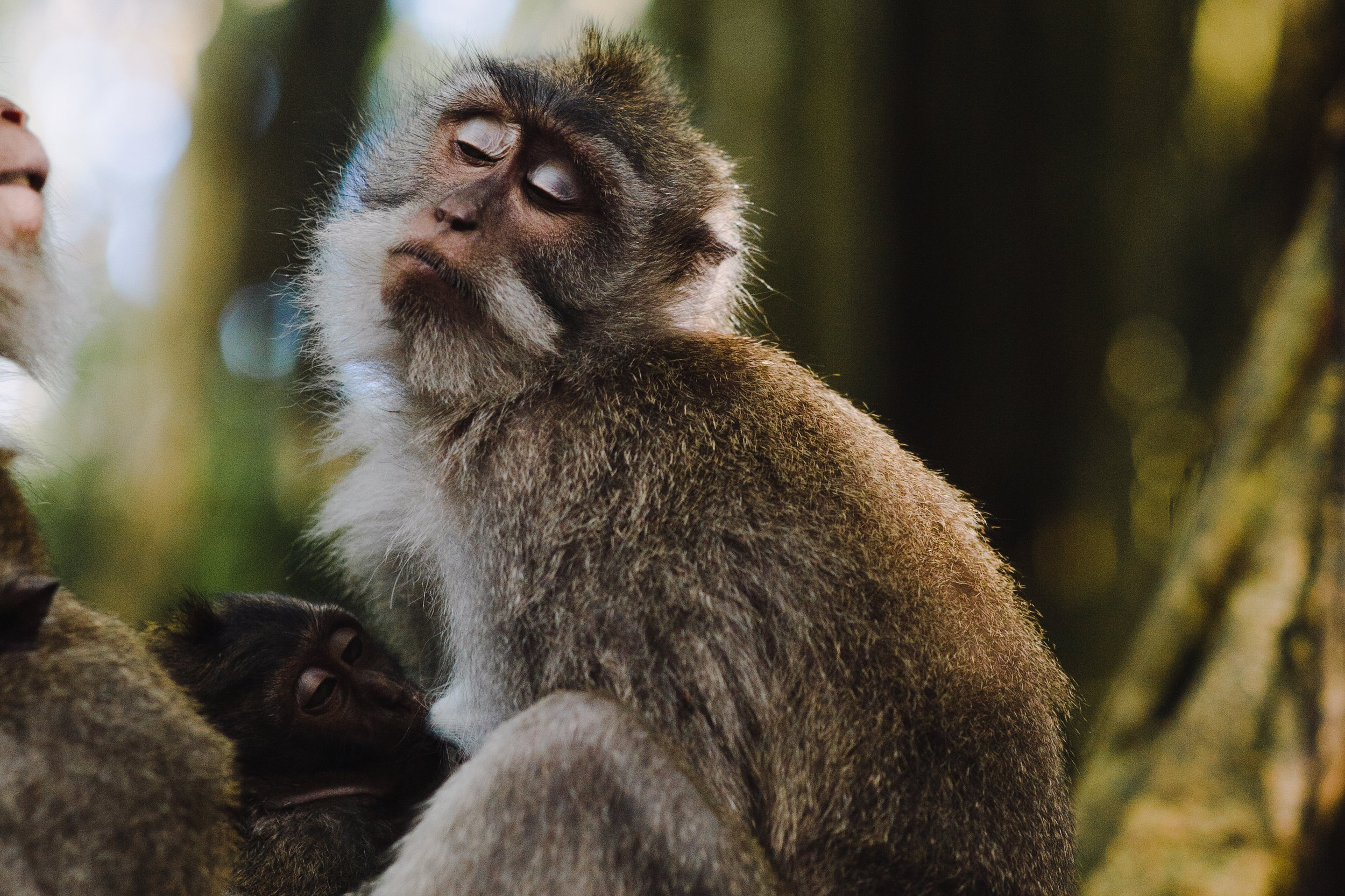 Monkey Mountain - What it was like: Wildlife Research Volunteer Project