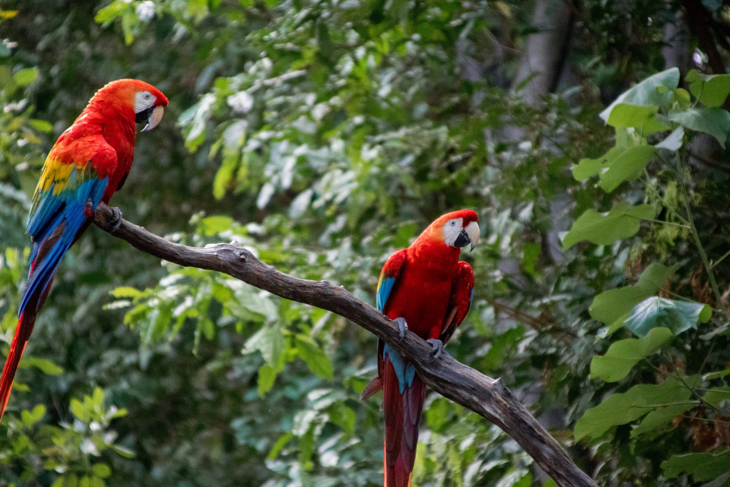 Macaw Project: Peru - What it was like: Wildlife Research Volunteer Project