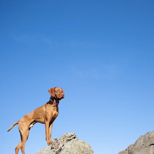 Coming Soon. #learnwithmonty #travelwithmonty #adventurewithmonty #createwithmonty Learn MORE! Link in profile . . . #mondaymotivation #vizsla #travel #adventure #create #mustlovedogs #dogsrule
