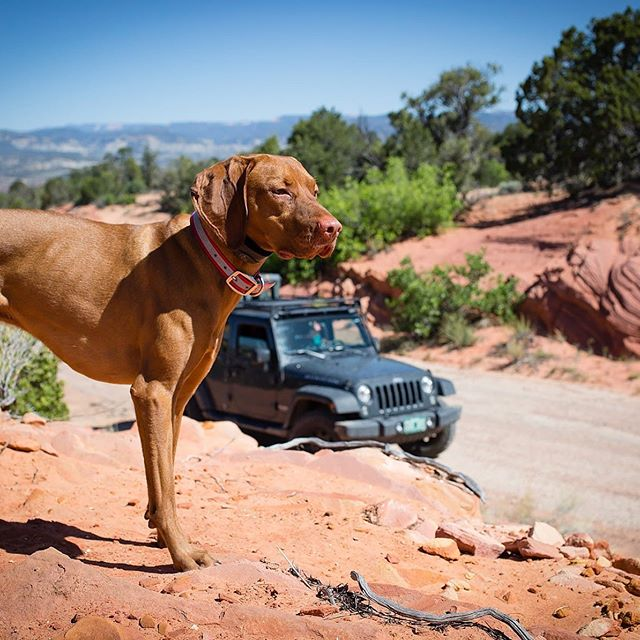 "I am counting down to the launch of MONDAYS WITH MONTY on June 1st by sharing some of my favorite moments that inspired us to create this new website to bring others on the journey with us: www.mondayswithmonty.com 🐾 In this memory, mom was taking me to an event called @overlandexpo which I suppose is intended for humans who drive cool vehicles. I'm here to say it's one heck of a dog event!! Mom was jealous, since I may have made more new friends than she did? 😝 We can't go this year, but she promised we'll try for next year's event (if I'm a good boy!) 😇 🐾 We crafted a limited time offer for my friends, family, and #truefans to become LIFETIME Founding Members for a one-time charge of $50. Our business plan covers the next ten years, so we are in this for the long-haul! #travelwithmonty #adventurewithmonty #createwithmonty 🐾 Learn more and become a member via the link in profile! Founding Members begin receiving content the first Monday after the day they join, in addition to a ""Jeep Load"" of other perks (almost said boat-load, but we are ALL about the Jeeps here!) 🐾 #dogtravel #vizsladog #travelwebsite #petphotography #outdoordog #jeepdog #explorewithdogs #dogadventures #jeepadventure"