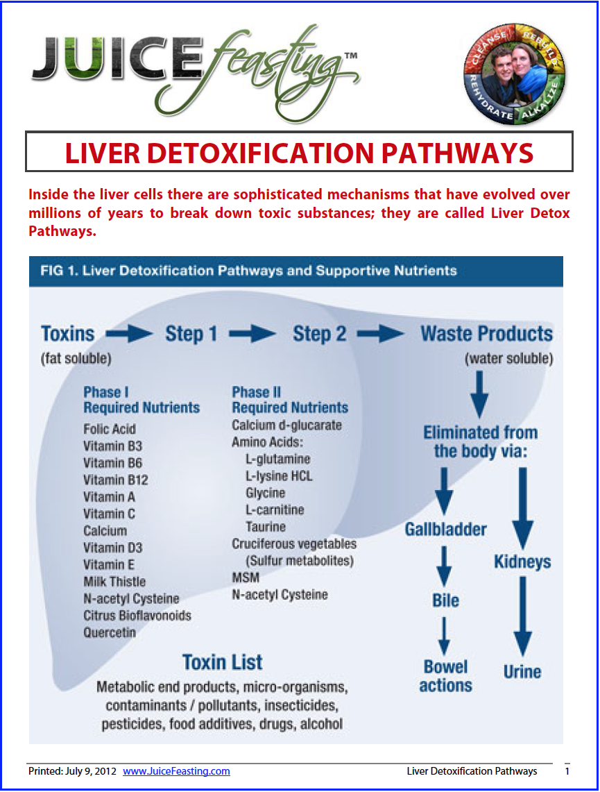 Liver Detoxification Pathways - by David Rainoshek, M.A.Inside the liver cells there are sophisticated mechanisms that have evolved over millions of years to break down toxic substances; they are called Liver Detox Pathways. Knowing how to support your Liver Detoxification Pathways is a key to health and longevity, and RIGHT NOW will give you a lot of insight into the role of your Liver in the detoxification aspect of Juice Feasting. This information will also clue you into the importance of a future topic: Glutathione and Detoxification.