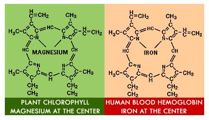 Heme-Chlorophyll.jpg