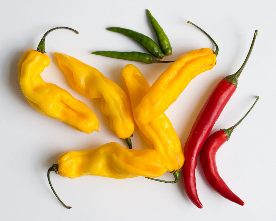 Prevent and Heal Disease With Chilies - by Sheryl WaltersSpicy foods add an incredible amount of flavour to food. As ethnic foods become abundant, chili and spicy food are increasingly popular. The good news is that adding spice to our food has a range of benefits for our health and wellbeing.Scientists have proven that capsaicin, which is responsible for the burning sensation when we eat chilies, can kill cancer cells, indicating that people could at least prevent the onset of cancer by eating spicy food. This is because it is a natural antioxidant, meaning that it defends against disease causing toxins.According to the World Health Organization, countries where diets are traditionally high in capsaicin have significantly lower cancer death rates for men and women than in countries where little spicy food is consumed.