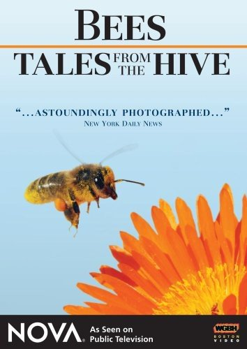 """[Documentary] NOVA: Bees: Tales from the Hive - Spend a year in this hive and experience life as a bee.Amazingly up-close footage filmed with specially developed macro lenses brings you the most intimate- and most spectacular- portrayal of a working bee colony ever filmed. It's not frightening- it's fascinating. See things you never imagined. Hear things only bees hear. Discover new found facts about the strange and complex life of bees.Did you know it takes nectar from 10 million flowers to create a single liter of honey? No wonder they're called worker bees! Tales from the Hive exposes a bee colony's secret world- detailing such rarely seen events as the life-or-death battle between a pair of rival queens, a bee eater's attack on the hive, a scout bee's mysterious dance that shares special """"nectar directions"""" with the rest of the hive. Also, watch the high-speed mid-air """"wedding flight"""" of drone and queen. See the colony's defense against a honey-loving bear."""