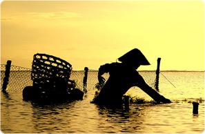 Seaweed-collecter.jpg