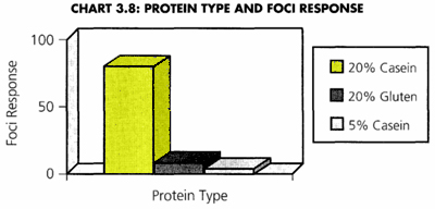 Protein-and-Foci.jpg