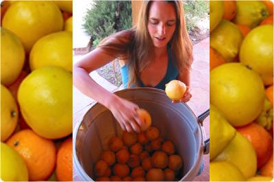 citrusKat-1.jpg