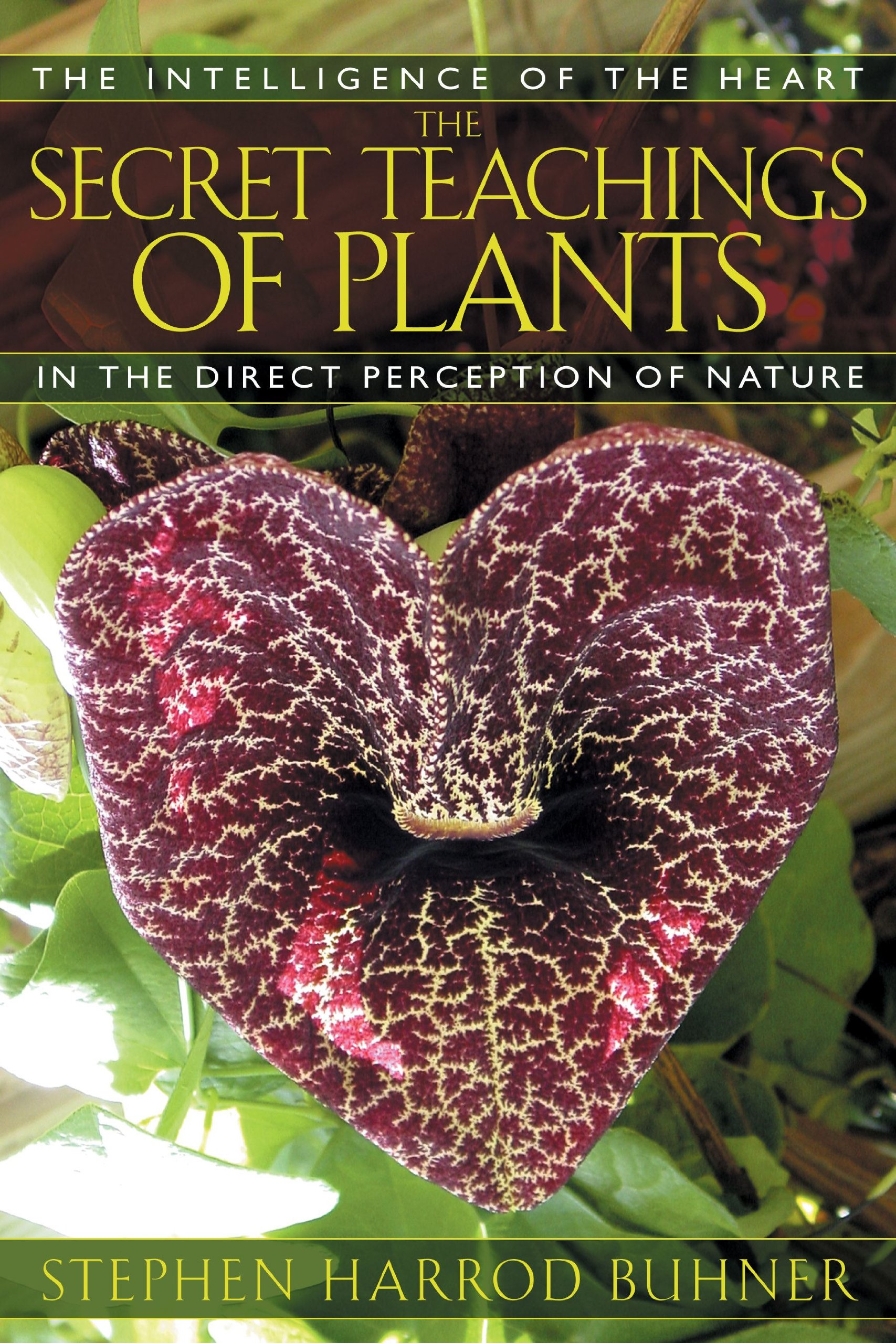 the secret teachings of plants : the intelligence of the heart in the direct perception of nature - By Stephen Harrod BuhnerAll ancient and indigenous peoples insisted their knowledge of plant medicines came from the plants themselves and not through trial-and-error experimentation. Less well known is that many Western peoples made this same assertion. There are, in fact, two modes of cognition available to all human beings–the brain-based linear and the heart-based holistic. The heart-centered mode of perception can be exceptionally accurate and detailed in its information gathering capacities if, as indigenous and ancient peoples asserted, the heart's ability as an organ of perception is developed.Author Stephen Harrod Buhner explores this second mode of perception in great detail through the work of numerous remarkable people, from Luther Burbank, who cultivated the majority of food plants we now take for granted, to the great German poet and scientist Goethe and his studies of the metamorphosis of plants. Buhner explores the commonalities among these individuals in their approach to learning from the plant world and outlines the specific steps involved. Readers will gain the tools necessary to gather information directly from the heart of Nature, to directly learn the medicinal uses of plants, to engage in diagnosis of disease, and to understand the soul-making process that such deep connection with the world engenders.